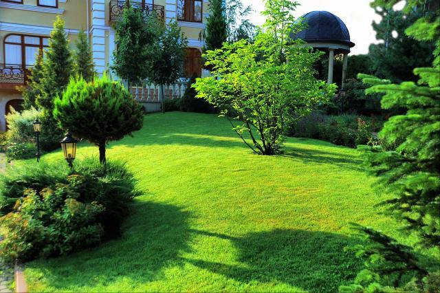 kompozycje roślinne, mały ogród, rośliny do ogrodu, drzewa iglaste, krzewy iglaste, iglaki, iglaki ozdobne