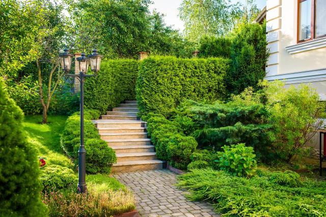 mały ogród, rośliny do ogrodu, drzewa iglaste, krzewy iglaste, iglaki, iglaki ozdobne, kompozycje roślinne