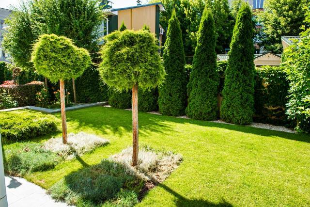 rośliny do ogrodu, drzewa iglaste, krzewy iglaste, iglaki, iglaki ozdobne, kompozycje roślinne, mały ogród