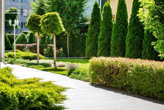 krzewy iglaste, iglaki, iglaki ozdobne, kompozycje roślinne, mały ogród, rośliny do ogrodu, drzewa iglaste