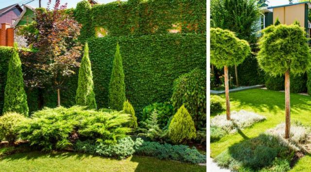 Które z iglaków nadają się do małych ogrodów?