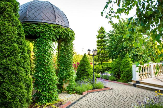 iglaki, iglaki ozdobne, kompozycje roślinne, ogród przydomowy, rośliny do ogrodu, drzewa iglaste, krzewy iglaste