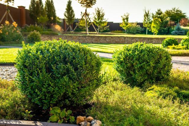 kompozycje roślinne, ogród przydomowy, rośliny do ogrodu, drzewa iglaste, krzewy iglaste, iglaki, iglaki ozdobne