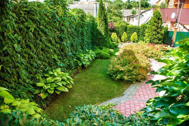 rośliny do ogrodu, drzewa iglaste, krzewy iglaste, iglaki, iglaki ozdobne, kompozycje roślinne, ogród przydomowy