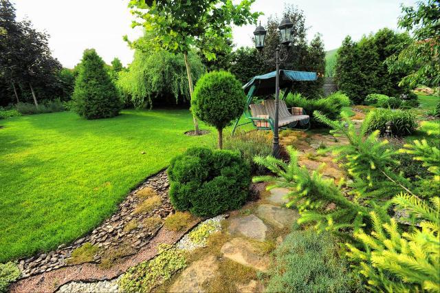 drzewa iglaste, krzewy iglaste, iglaki, iglaki ozdobne, kompozycje roślinne, ogród przydomowy, rośliny do ogrodu