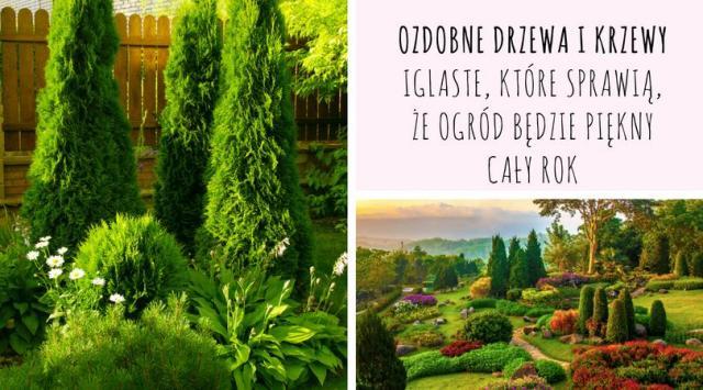 Ozdobne drzewa i krzewy iglaste, które sprawią, że ogród będzie piękny cały rok