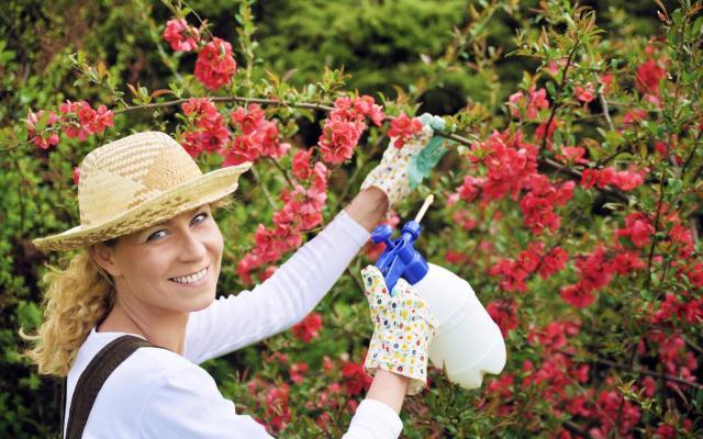 Jak domowymi sposobami pozbyć się z ogrodu szkodników?