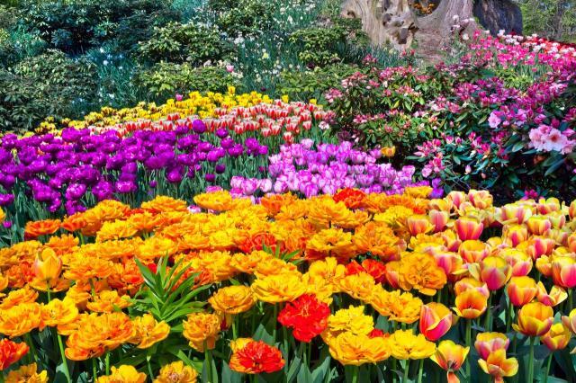 5 kwiatów do ogrodu, które kwitną całe lato