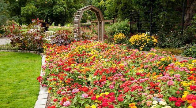 kwiaty ogrodowe, kwiaty do ogrodu