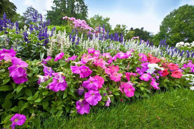 Ogród, który kochają kwiaty - jak go urządzić?