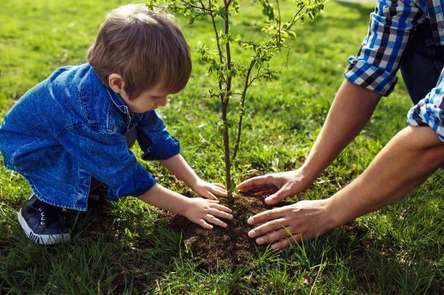 Drzewa do małego ogrodu - co kupić?