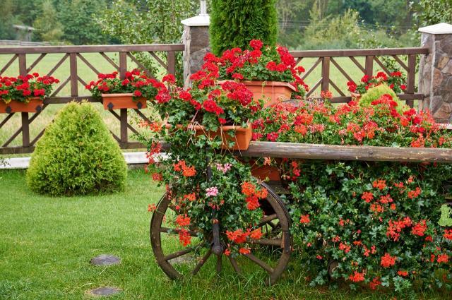 5 kwiatów do ogrodu, które odstraszają komary