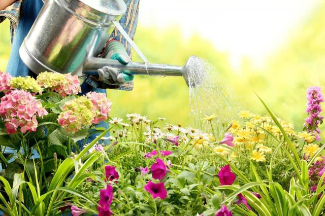 4 najpiękniejsze kwiaty do ogrodu na wiosnę