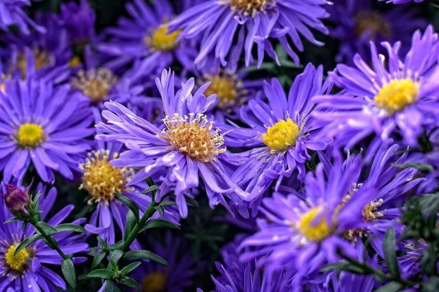 Jakie kwiaty do ogrodu na wiosnę?