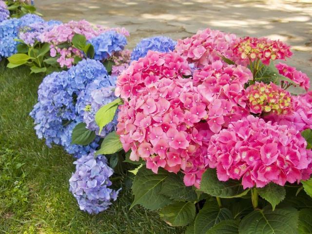 6 kwiatów, które warto wybrać do cienistego ogrodu