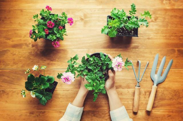 Jakie kwiaty doniczkowe do ogrodu warto wybrać?