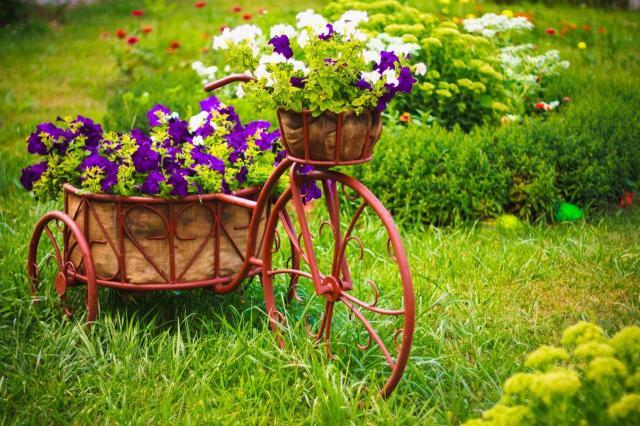 Kwiaty do ogrodu długo kwitnące – co wybrać?