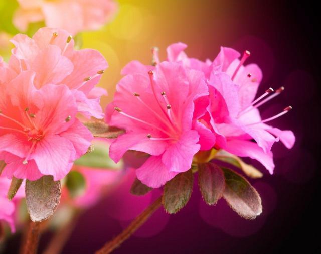 6 kwiatów do małego ogrodu, które musisz mieć