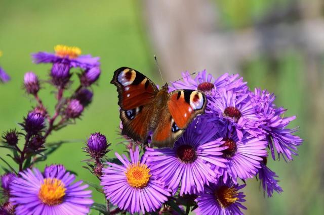 Jakie kwiaty kwitnące całe lato wybrać do małego ogrodu?
