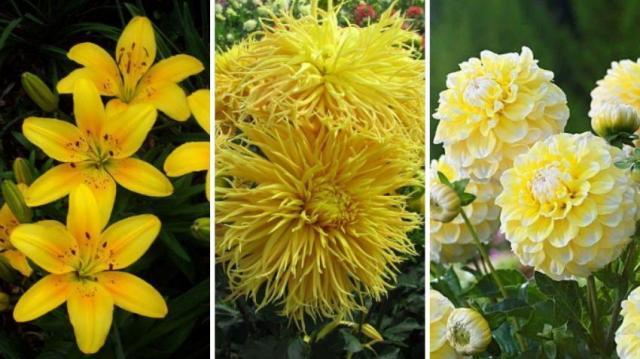 9 wyjątkowych kwiatów do ogrodu w kolorze żółtym