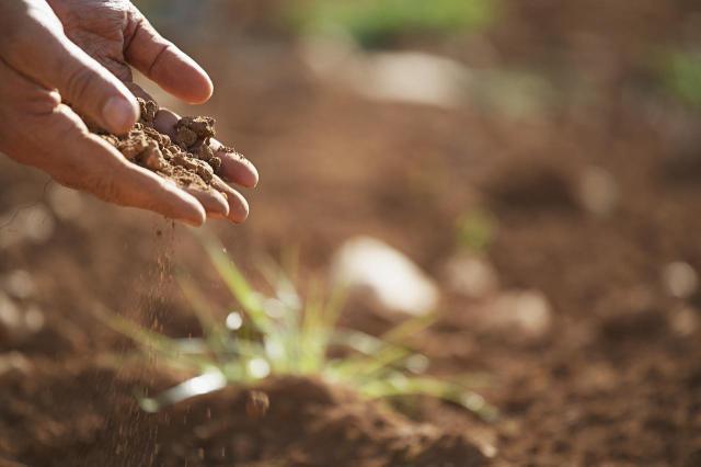 Dlaczego warto stosować mocznik w ogrodzie?