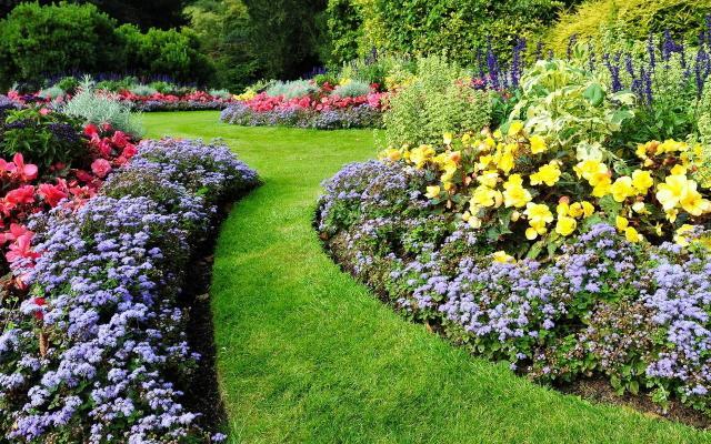 rośliny do ogrodu, kwiaty do ogrodu, krzewy ogrodowe, kwiaty ogrodowe
