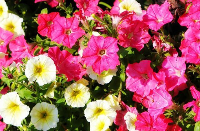 Jakie kwiaty warto posadzić w ogrodzie, aby był piękny?