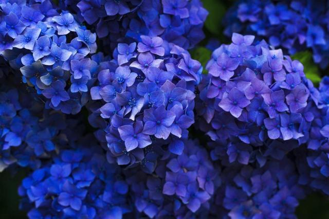 rośliny do ogrodu, rośliny ogrodowe, kwiaty do ogrodu, kwiaty ogrodowe