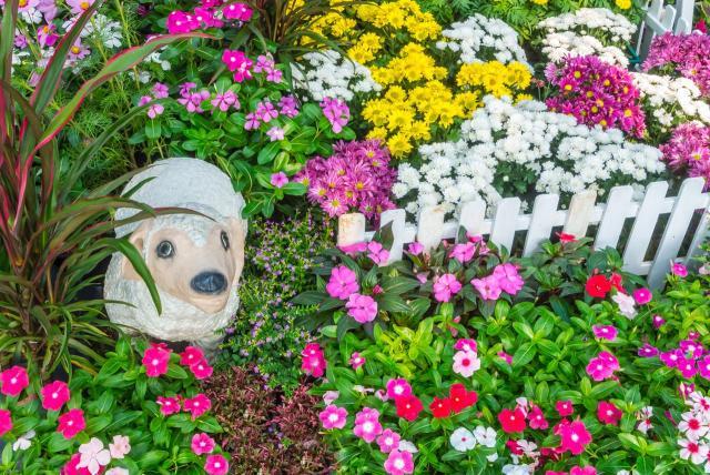 Jakie kwiaty będą najlepsze do ogrodu marzeń?