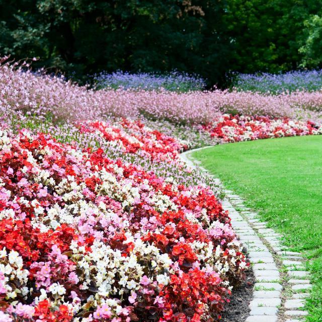 kwiaty do ogrodu, rośliny do ogrodu, ogród marzeń