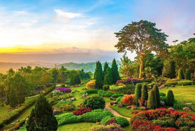 Jakie kwiaty do ogrodu całorocznego?
