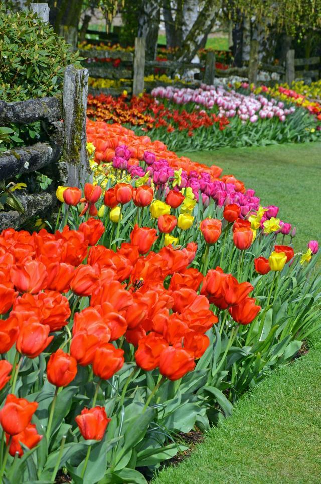 kwiaty do ogrodu, kwiaty ogrodowe, ogród całoroczny, rośliny do ogrodu